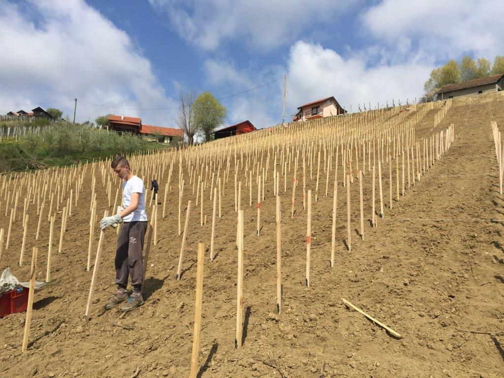 novi vinogradi eko robert zdolc