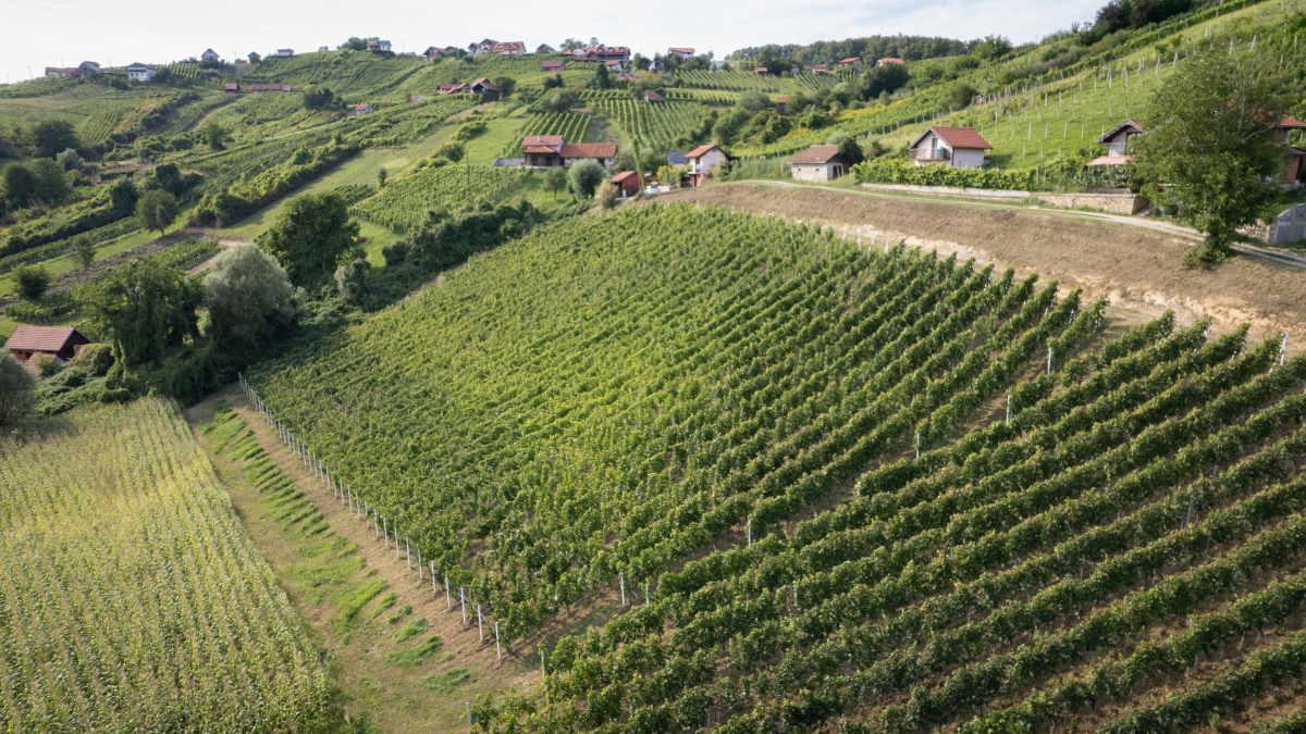 Prelijepi vinogradi Roberta Zdolca gdje se proizvode Ekološka vina