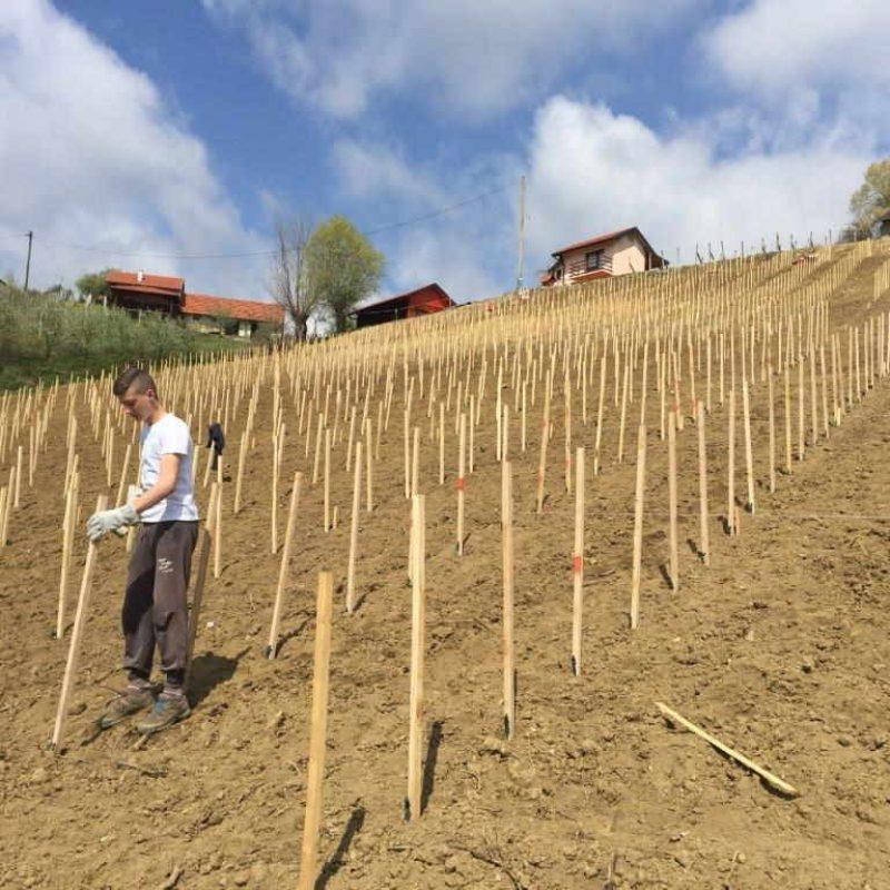 novi-vinogradi-eko-robert-zdolc